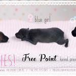 Free Point szczeniaczki